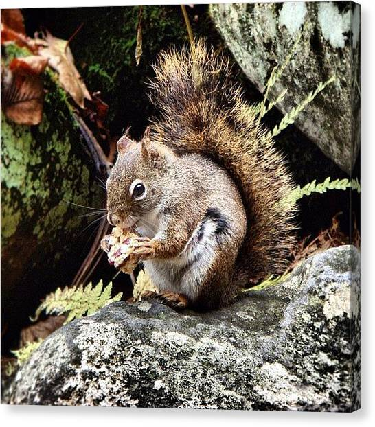 Squirrels Canvas Print - Curious Squirrel by Joel Lopez