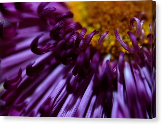 Curling Up Canvas Print by Christy Phillips