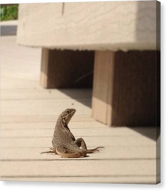 Lizards Canvas Print - Curly Tail! #lizard #curlytail #beach by Emily W