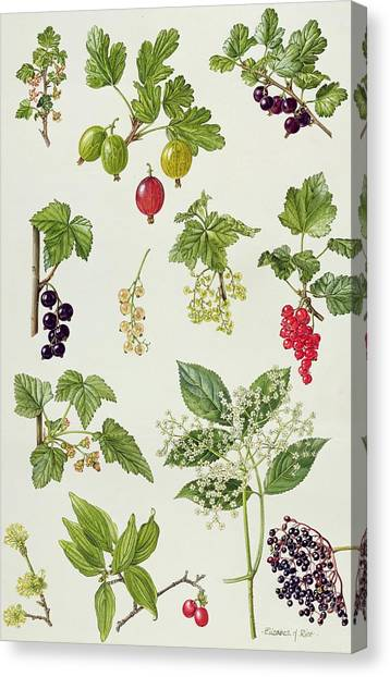 Wild Berries Canvas Print - Currants And Berries by Elizabeth Rice