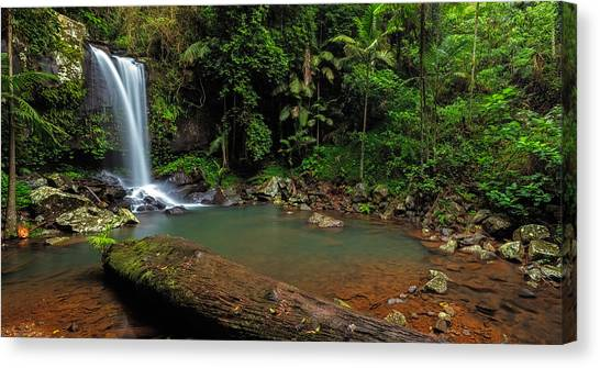 Curtis Falls - Mt Tamborine Canvas Print