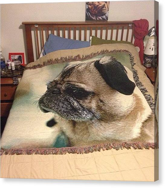 Pugs Canvas Print - #custom #rocky #pug #blanket #pentax by Adam Way