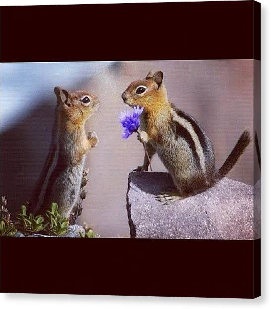 Squirrels Canvas Print - Cute <3 #cute #nature #animals by Ollie Barton