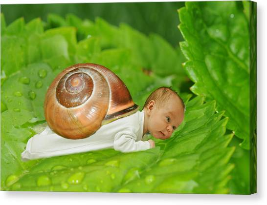 Cute Baby Boy With A Snail Shell Canvas Print