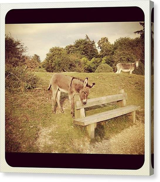 Donkeys Canvas Print - #cute #donkey #donkeys #babydonkey by Niki Taylor