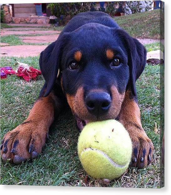 Tennis Canvas Print - Cute Puppy With A Tennis Ball by Adriana Guimaraes