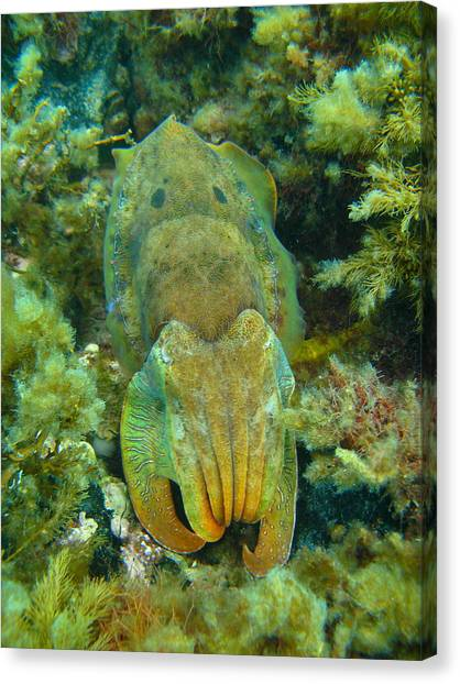Green Camo Canvas Print - Cuttlefish Camo by Bruce J Robinson