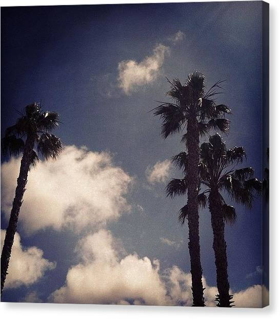 Ocean Life Canvas Print - Cya San Diego! Back To La...#iphone by Loghan Call