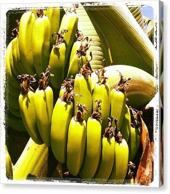 Bananas Canvas Print - #cyprus #banana #coralbay #cyprus12 by Craig Kemp