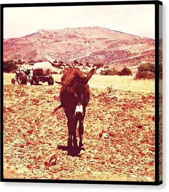 Donkeys Canvas Print - #cyprus2012 #cyprus12 #cyprus #paphos by Craig Kemp