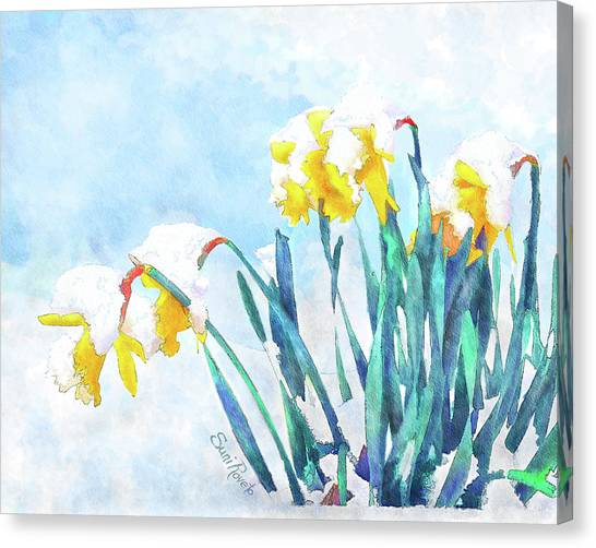 Daffodils With Bad Timing Canvas Print by Suni Roveto