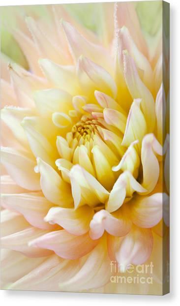 Dahlias Canvas Print - Dahlia Flower 03 by Nailia Schwarz