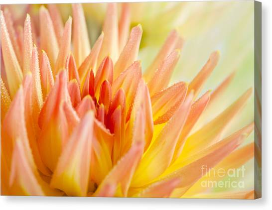 Dahlias Canvas Print - Dahlia Flower 06 by Nailia Schwarz