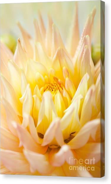 Dahlias Canvas Print - Dahlia Flower 10 by Nailia Schwarz