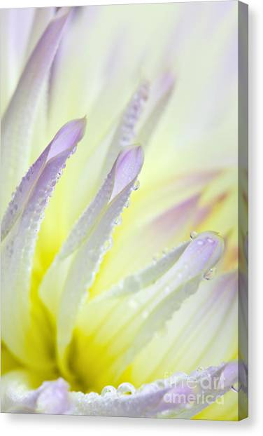 Dahlias Canvas Print - Dahlia Flower 11 by Nailia Schwarz