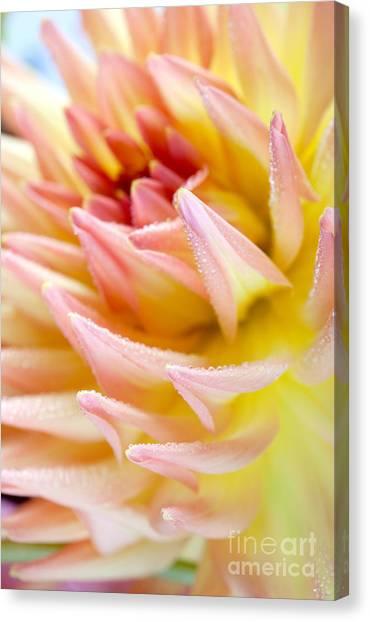 Dahlias Canvas Print - Dahlia Flower 13 by Nailia Schwarz