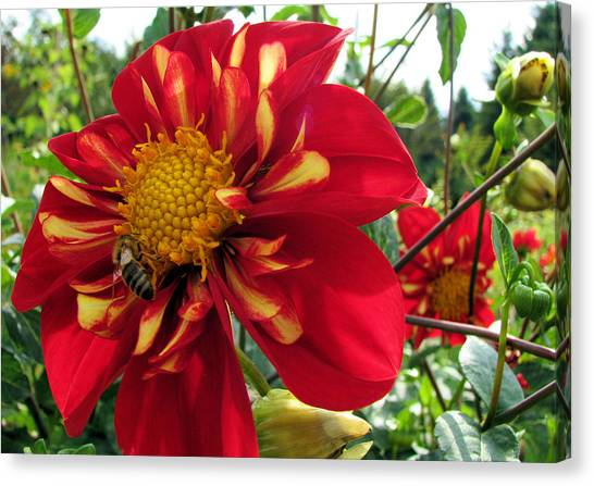 Dahlia Make My Day 1 Canvas Print