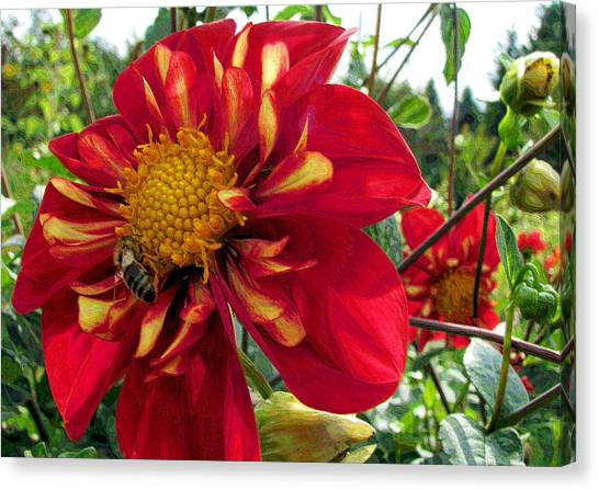 Dahlia Make My Day Canvas Print