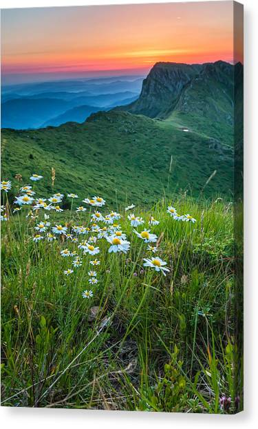 Daisies In The Mountyain Canvas Print