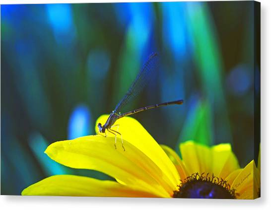 Daisy And Dragonfly Canvas Print