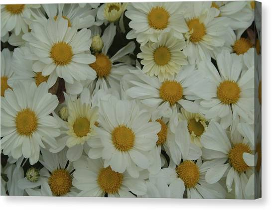 Canvas Print featuring the photograph Daisy by Ralph Jones