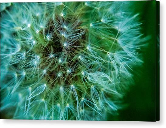 Dandelion Puff-green Canvas Print