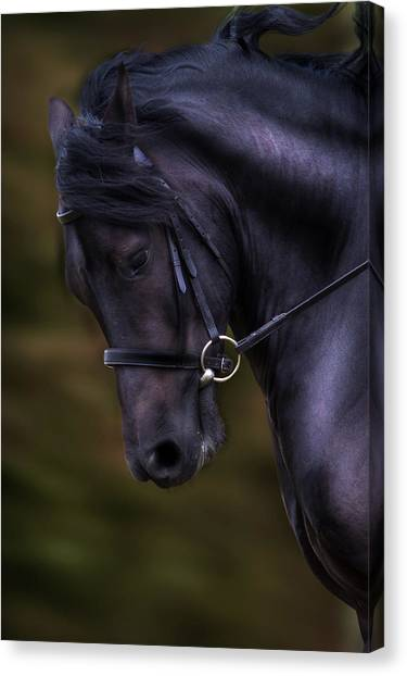 Dark Bay Horse Head Canvas Print
