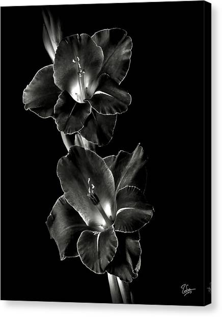 Dark Gladiolas In Black And White Canvas Print