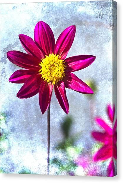 Dahlias Canvas Print - Dark Pink Dahlia On Blue by Carol Leigh