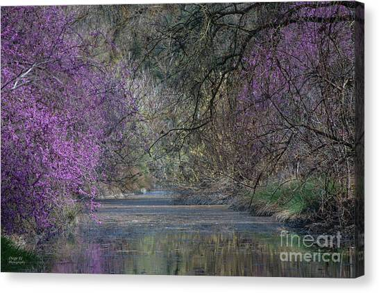 Uc Davis Canvas Print - Davis Arboretum Creek by Diego Re