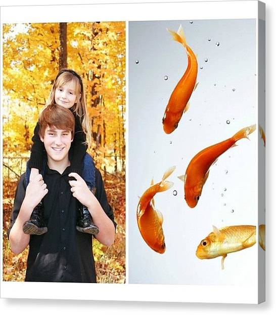 Goldfish Canvas Print - Day 1 & 2: Self-potrait & Pets by Caleb Schlaack