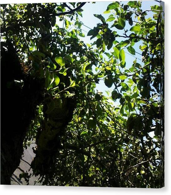 Fruit Trees Canvas Print - Day 4) Something Green; #green #leaves by Elisa B