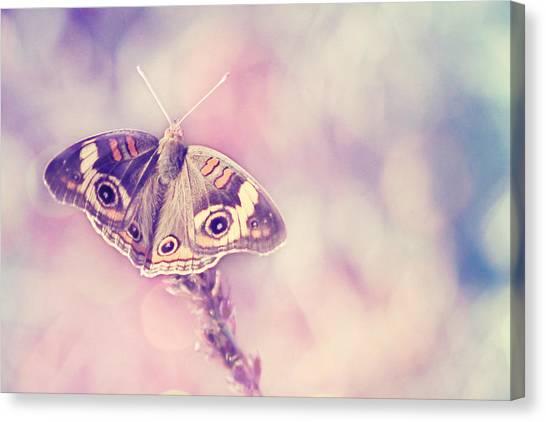 Buckeye Butterfly Canvas Print - Day Dream by Amy Tyler