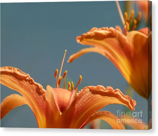 Day Lilies Canvas Print by Christine Stack