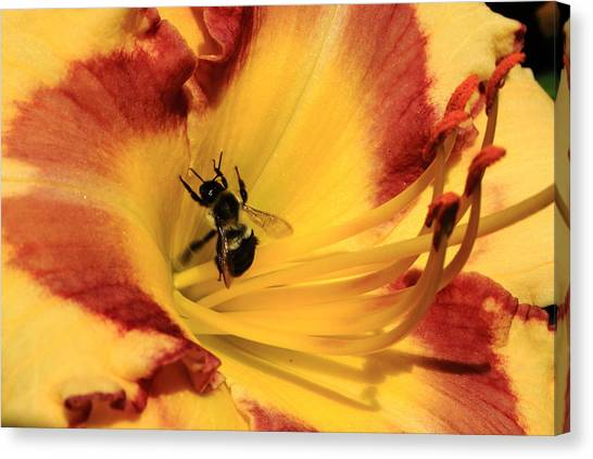 Day Lilly IIi Canvas Print