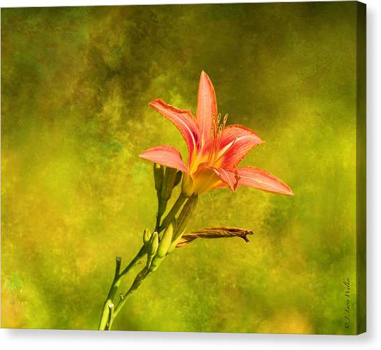 Daylily All Alone Canvas Print by J Larry Walker