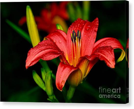 Daylily Canvas Print by Ronald Monong