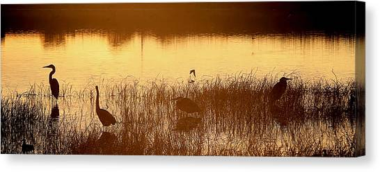 Days End At The Wetlands Canvas Print