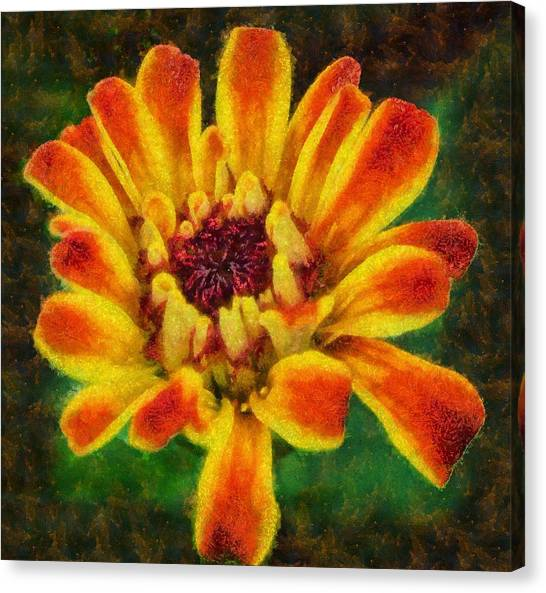 Dazzling Zinnia Canvas Print