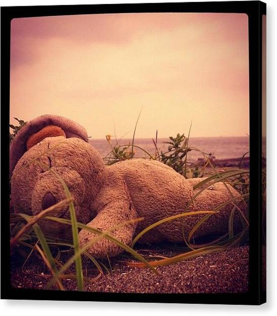 Bears Canvas Print - Dead Bear On The Beach by Patric Spohn
