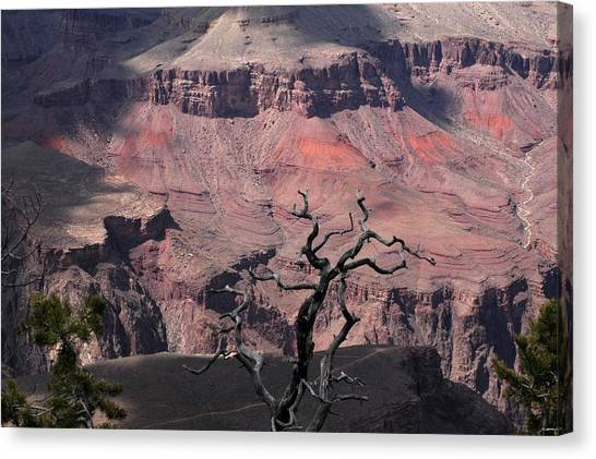 Dead Tree At The Canyon Canvas Print