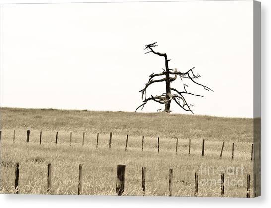 Dead Tree Dancing Canvas Print