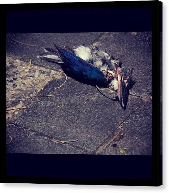 Kingfisher Canvas Print - Death by Szu Kiong Ting
