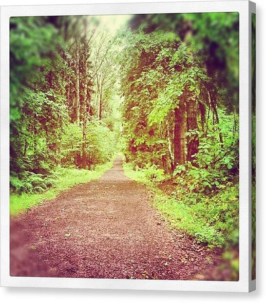 Forest Paths Canvas Print - Decide What Path You Want To Take In by Tess Walther