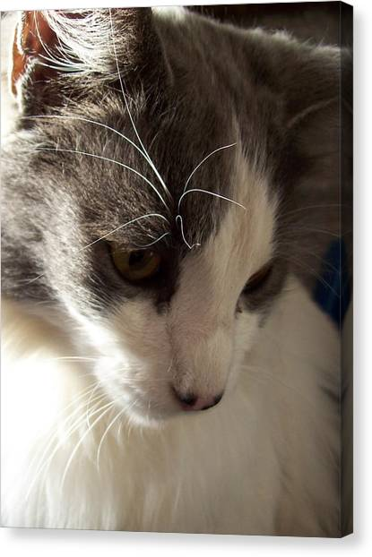 Manx Cats Canvas Print - Deep Thought by Pamela Roberts-Aue
