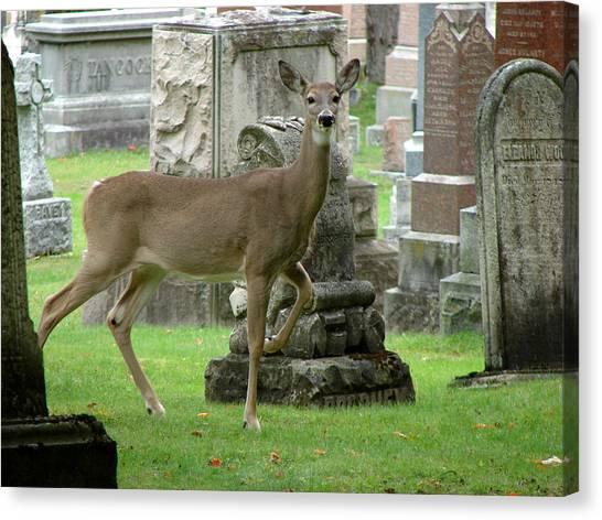 Deer Among The Headstones Canvas Print