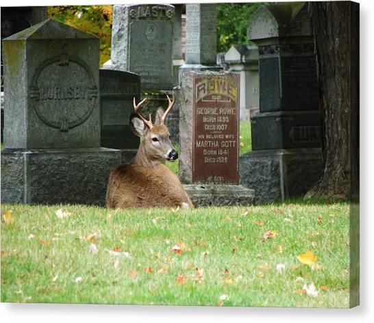 Deer In Cemetery Canvas Print