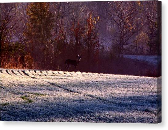 Deer In The Distance Canvas Print by Jake Busby