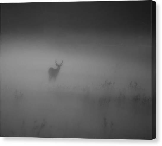 Deer In The Fog Canvas Print by Nicholas Palmieri