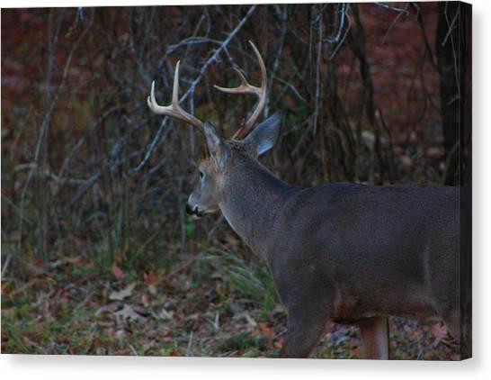 Deer Canvas Print by Jake Busby